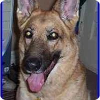 Adopt A Pet :: Ruby - Hamilton, ON