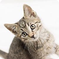 Adopt A Pet :: Mack - Fountain Hills, AZ