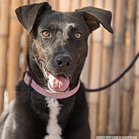 Adopt A Pet :: Abby - Cedar Crest, NM