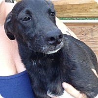Adopt A Pet :: Little Edi meet me 7/22 - Manchester, CT
