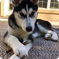 Adopt A Pet :: Willow - NO LONGER ACCEPTING APPLICATIONS!! - Arlington, VA