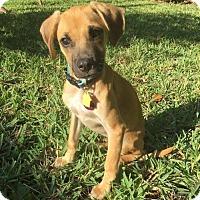 Adopt A Pet :: Freddie - Fort Lauderdale, FL