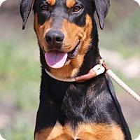 Adopt A Pet :: Lucy - Fillmore, CA