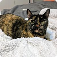 Adopt A Pet :: Tessa - Concord, NC