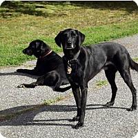 Adopt A Pet :: Ben #2 and Jake - Towson, MD