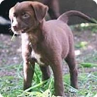 Adopt A Pet :: Aspen#1236 - Arlington Heights, IL