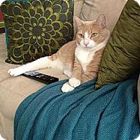 Adopt A Pet :: *Oliver - Winder, GA