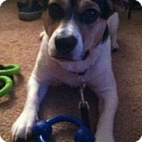 Adopt A Pet :: Archie - Bridgewater, NJ