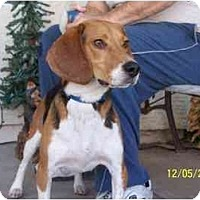Adopt A Pet :: J.D. (Shiloh) - Phoenix, AZ