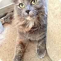 Adopt A Pet :: JEZZIE- 2013 - Hamilton, NJ