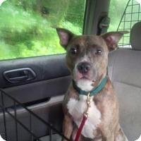 Adopt A Pet :: Miyagi - Kimberton, PA