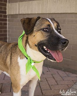 Shepherd (Unknown Type) Mix Dog for adoption in Mooresville, North Carolina - Twyla
