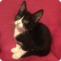 Adopt A Pet :: Kayla - Nolensville, TN