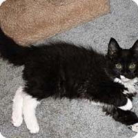 Adopt A Pet :: Valentine - Merrifield, VA