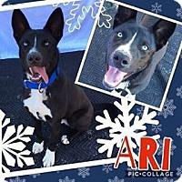 Adopt A Pet :: Ari - Waxhaw, NC