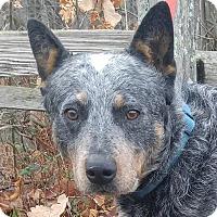Adopt A Pet :: Smokey - Windham, NH
