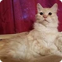 Adopt A Pet :: Suki - Ennis, TX