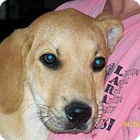 Adopt A Pet :: Roscoe - Mexia, TX