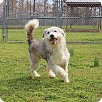 Adopt A Pet :: Xenon - Savannah, TN