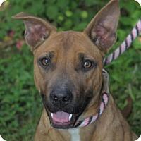 Adopt A Pet :: BANDERA - Red Bluff, CA