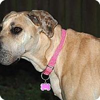 Adopt A Pet :: Dora - Oak Ridge, TN