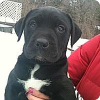 Adopt A Pet :: Bishop - Hadley, MI