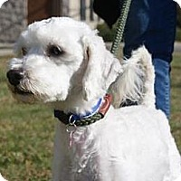 Adopt A Pet :: Marcell - Rockaway, NJ
