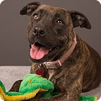 Adopt A Pet :: Sable - Eugene, OR