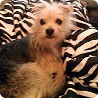 Adopt A Pet :: Gizmo - Seattle, WA