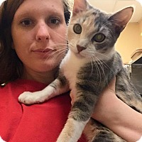Domestic Shorthair Cat for adoption in McDonough, Georgia - Petsmart McDonough Kitties