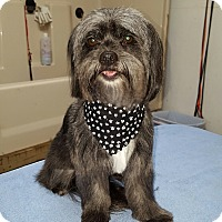 Adopt A Pet :: BELLA - Georgetown, KY