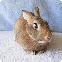 Other/Unknown Mix for adoption in Fountain Valley, California - Juniper