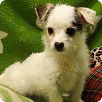 Adopt A Pet :: Ellie May - Vacaville, CA