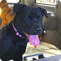 Adopt A Pet :: Allie - Pleasanton, CA