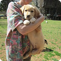 Adopt A Pet :: TREVOR - Lincolndale, NY