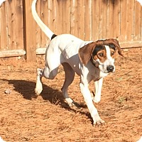 Adopt A Pet :: Buford - Lexington, MA