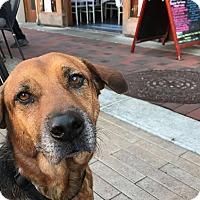 Adopt A Pet :: Canela (COURTESY POST) - Baltimore, MD
