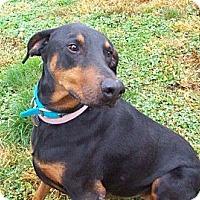 Adopt A Pet :: Princess--adopted!! - New Richmond, OH