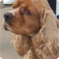 Adopt A Pet :: Fred - Menomonee Falls, WI