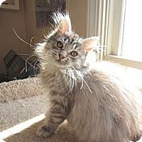 Adopt A Pet :: Keelyn - Arlington, VA