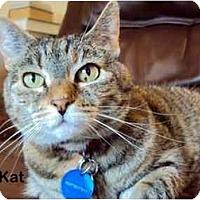 Adopt A Pet :: KitKat - Portland, OR