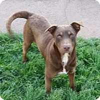 Adopt A Pet :: Thor - Pikeville, TN