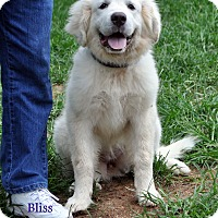Adopt A Pet :: Bliss - Indian Trail, NC