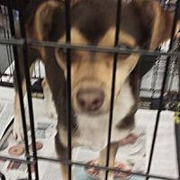 Adopt A Pet :: Bentley - Fresno, CA