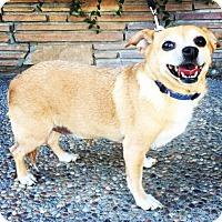 Adopt A Pet :: Sally - Santa Cruz, CA
