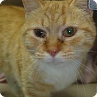 Adopt A Pet :: Jan - Hamburg, NY