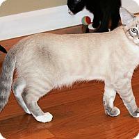 Adopt A Pet :: Darby - Morganton, NC