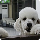 Adopt A Pet :: Yang-yang