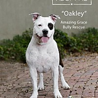 Adopt A Pet :: Oakley - Pensacola, FL