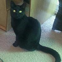 Adopt A Pet :: PIPER - Lawton, OK